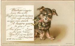 black and tan colored dog with sprig of holy in mouth, raises his right paw