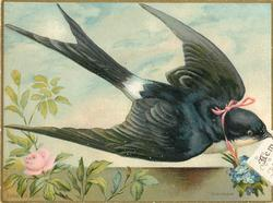bird ?swallow carrying greeting in mouth, pink ribbon with blue flowers attached to neck