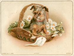 small brown and black dog  sitting on flowers in basket with greeting tag