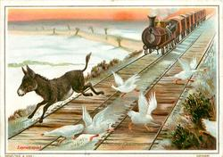 EXPRESS SPEED donkey and geese running in front of oncoming train