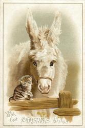 white donkey facing forward towards small cat on fence rail