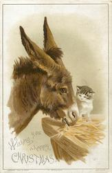 brown donkey eats with cat sitting on  edge of manger