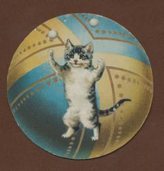 cat on hind legs juggling balls