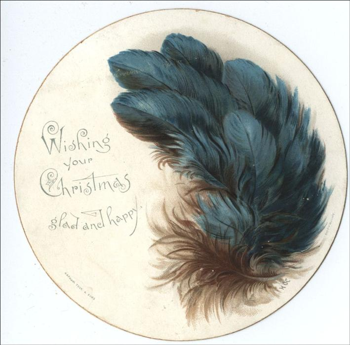 blue colored feathers along right edge