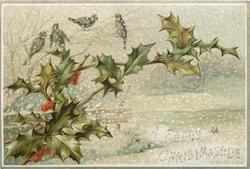 four birds sit on branch above two large branches of holly