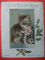 striped brown cat with pink ribbon and bow at neck looks left