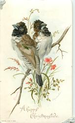 SPERMESTES two brown and white birds sitting on branch both looking in different direction, red flowers underneath