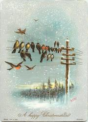 many birds perched on telephone lines