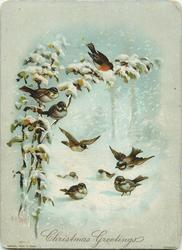 four birds on ground, two flying, and three on snowy branch