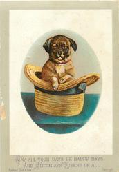 pug dog in straw hat