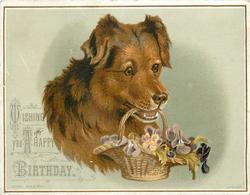 dog holds basket of flowers in its mouth