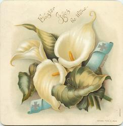 sprig of white calla lilies with blue ribbon