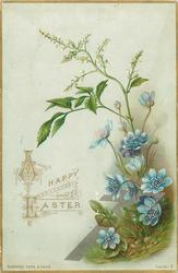blue flowers at base with white flowers on stem going up and arching over