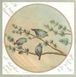 one bird on branch, two birds below on branch