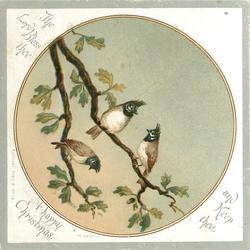 two birds on branch, one bird below on branch