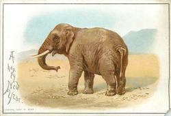 elephant faces left