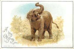 elephant faces front and slightly right with trunk raised