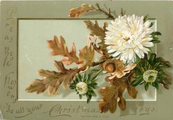 white chrysanthemums with oak leaves and acorns
