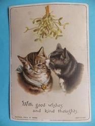 brown striped cat with blue ribbon with black and white cat under the mistletoe