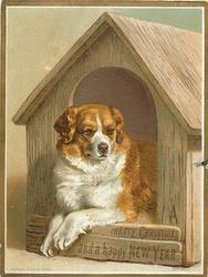 brown and white dog lays with paws hanging over the front of the doorway, holds his head up