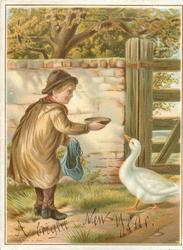 TEMPTATION boy feeds goose