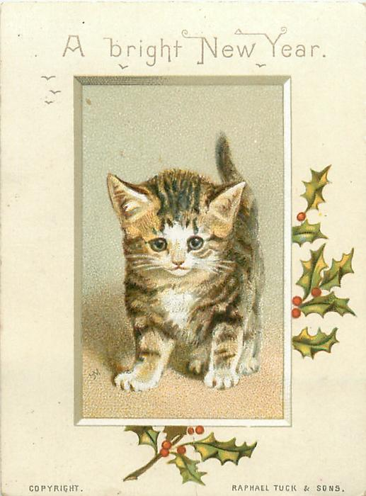 two toned brown striped kitten with white face and chest