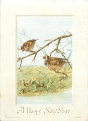 two birds on branch with one bird on branch above them