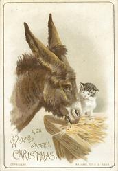 donkey eats at manger and looks right, cat looks at donkey