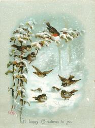 three birds on branch, several below on ground in snow