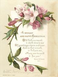 pink flowers on vine