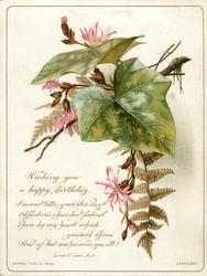 pink flowers, brown fern leaves, green ivy leaves