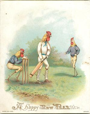 roosters playing cricket