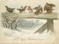 six birds on top rail of wooden fence in winter
