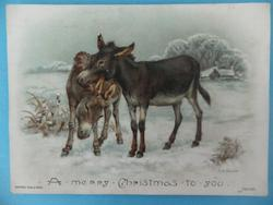 two donkeys playing in snow
