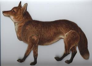 THE COMMON FOX (CANIS VULPES)