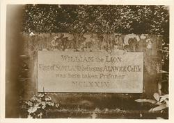 WILLIAM THE LION TABLET
