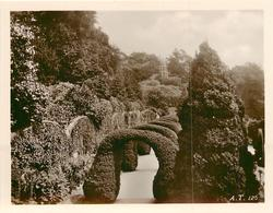topiary hedge arches