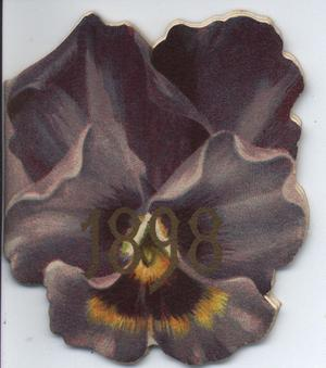 1898 purple pansy