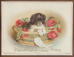 small black and white dog in basket with red flowers