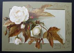 white rose with brown leaves