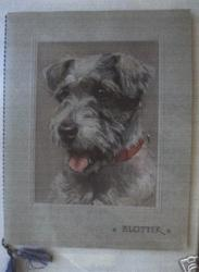 BLOTTER portrait of grey colored terrier dog wearing a red collar
