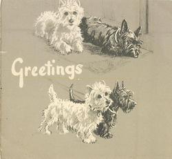 GREETINGS 4 terriers