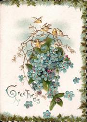 GREETINGS below spray of blue forget-me-nots & a twig of mistletoe under tiny birds, evergreen borders