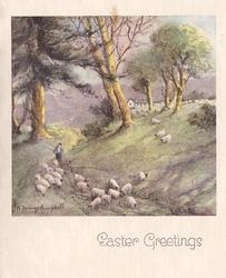 EASTER GREETINGS many sheep graze at base of hill