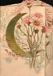 GOOD WISHES & gilt moon on left flap, pale pink daisies vertically on both flaps,