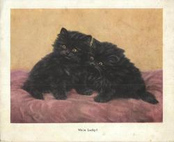 WE'RE LUCKY! two fluffy black kittens, sitting on velvety cushion, look left