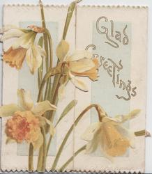 GLAD GREETINGS on right flap, daffodils left & below
