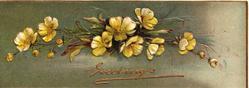 GREETINGS  in gilt below yellow primroses, green background, embossed