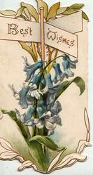 "BEST WISHES in gilt on brown ""sign-post"" inset, bluebells below, embossed"
