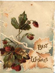 BEST WISHES in gilt lower right, blackberries left, pale blue background